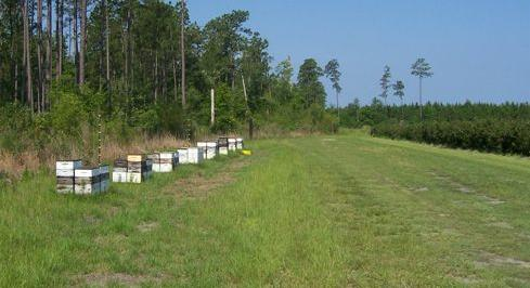 http://agr.georgia.gov/Data/Sites/1/media/ag_plantindustry/plant_protection/images/bees2.jpg